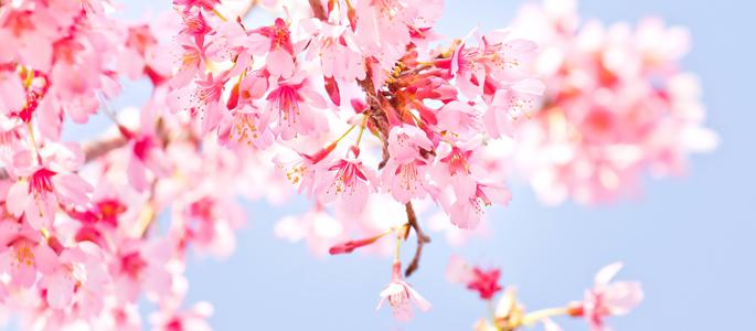 h2_springsong_001